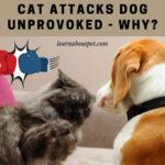 Cat Attacks Dog Unprovoked : 7 Clear Reasons Why Your Cat Is Attacking Dog