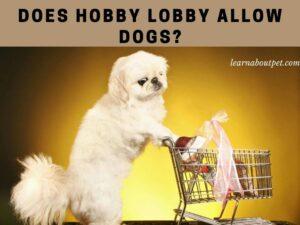 Is hobby lobby pet friendly
