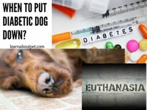 when to put diabetic dog down