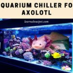 Aquarium Chiller For Axolotl : 9 Important Things To Note Before Buying