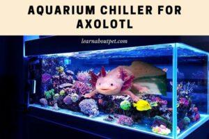 Aquarium chiller for axolotl