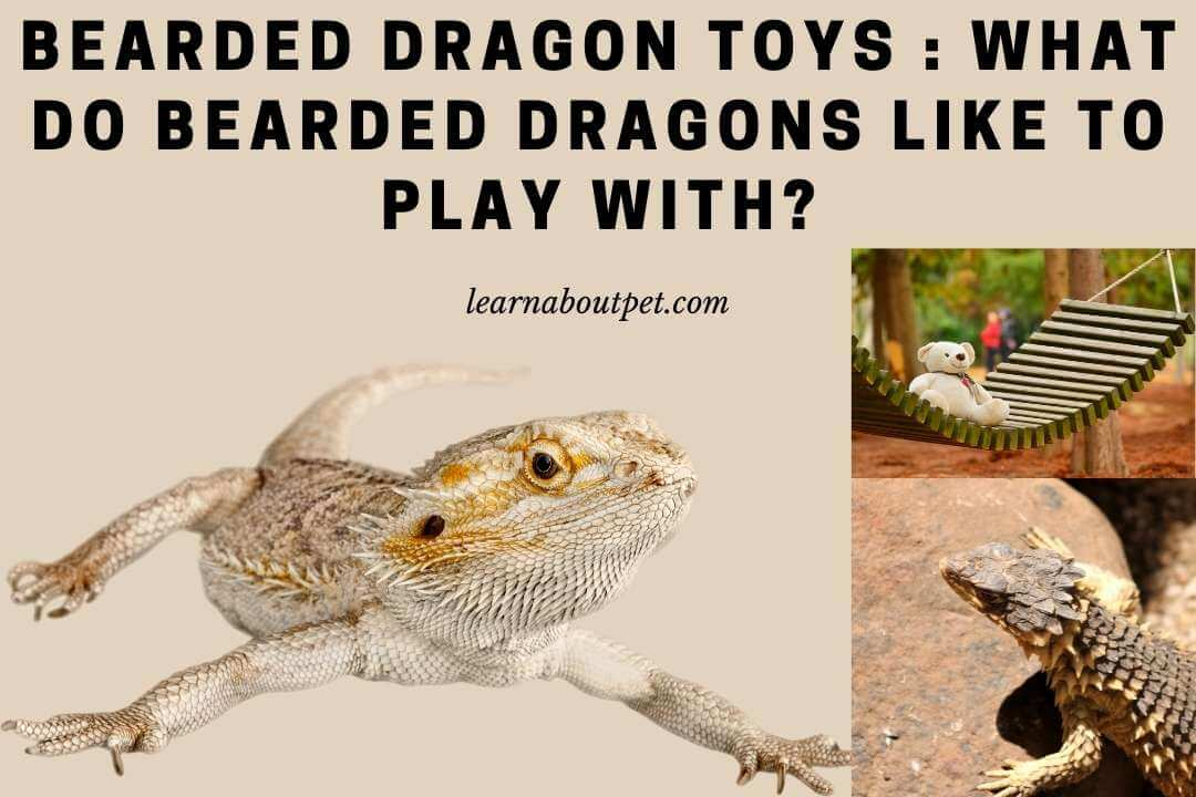 Bearded dragon toys - what do bearded dragons like to play with