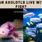 Can Axolotls Live With Fish? (11 Interesting Facts)