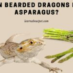 Can Bearded Dragons Eat Asparagus? 25 Interesting Questions Answered