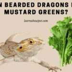 Can Bearded Dragons Eat Mustard Greens? 11 Interesting Facts