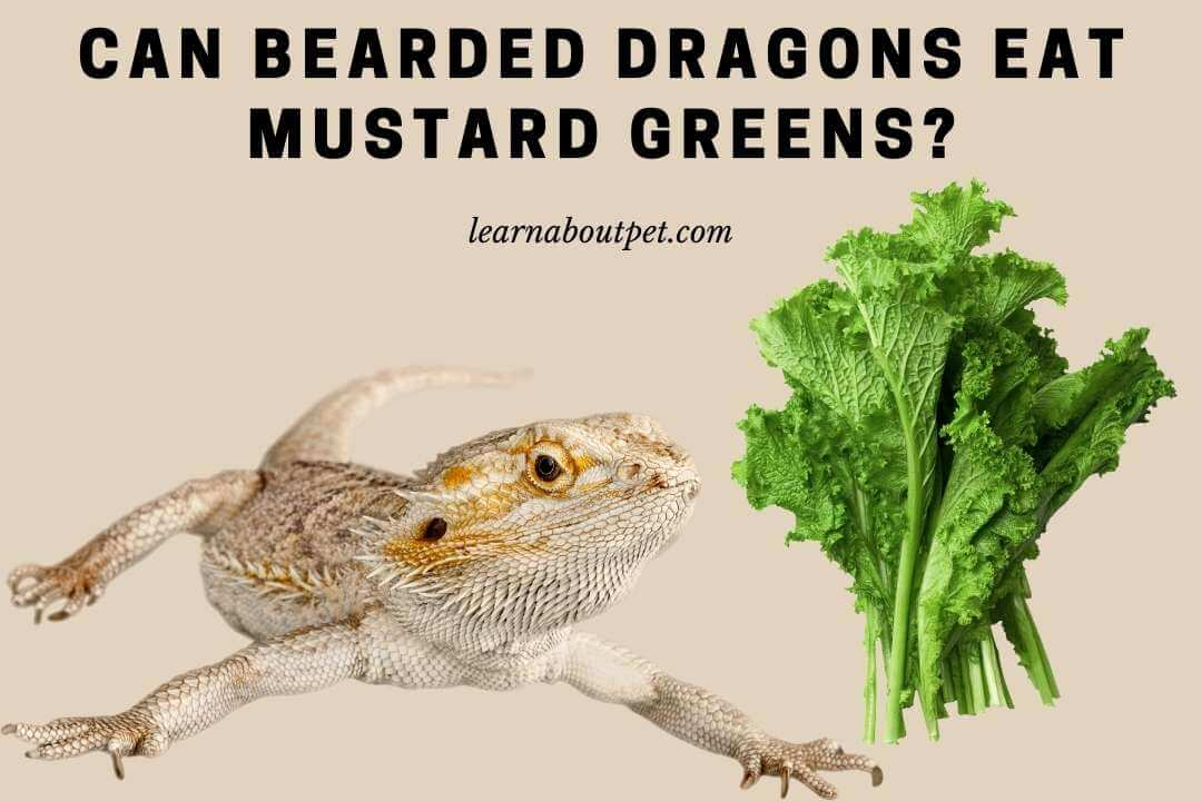 Can bearded dragons eat mustard greens