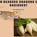 Can Bearded Dragons Eat Radishes? 5 Healthy Benefits From Beardie Eating Radish