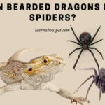 Can Bearded Dragons Eat Spiders? (15 Interesting Facts)