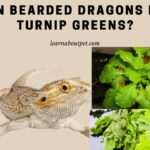 Can Bearded Dragons Eat Turnip Greens? 18 Healthy Nutritional Benefits