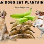 Can Dogs Eat Plantains? (9 Interesting Health Benefits)