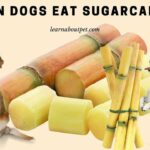 Can Dogs Eat SugarCane? (7 Interesting Reasons Why Dogs Shouldn't Eat Sugar Cane Heavily)