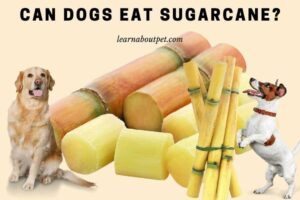 Can dogs eat sugarcane