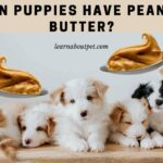 Can Puppies Have Peanut Butter? 7 Menacing Symptoms Of Overfeeding