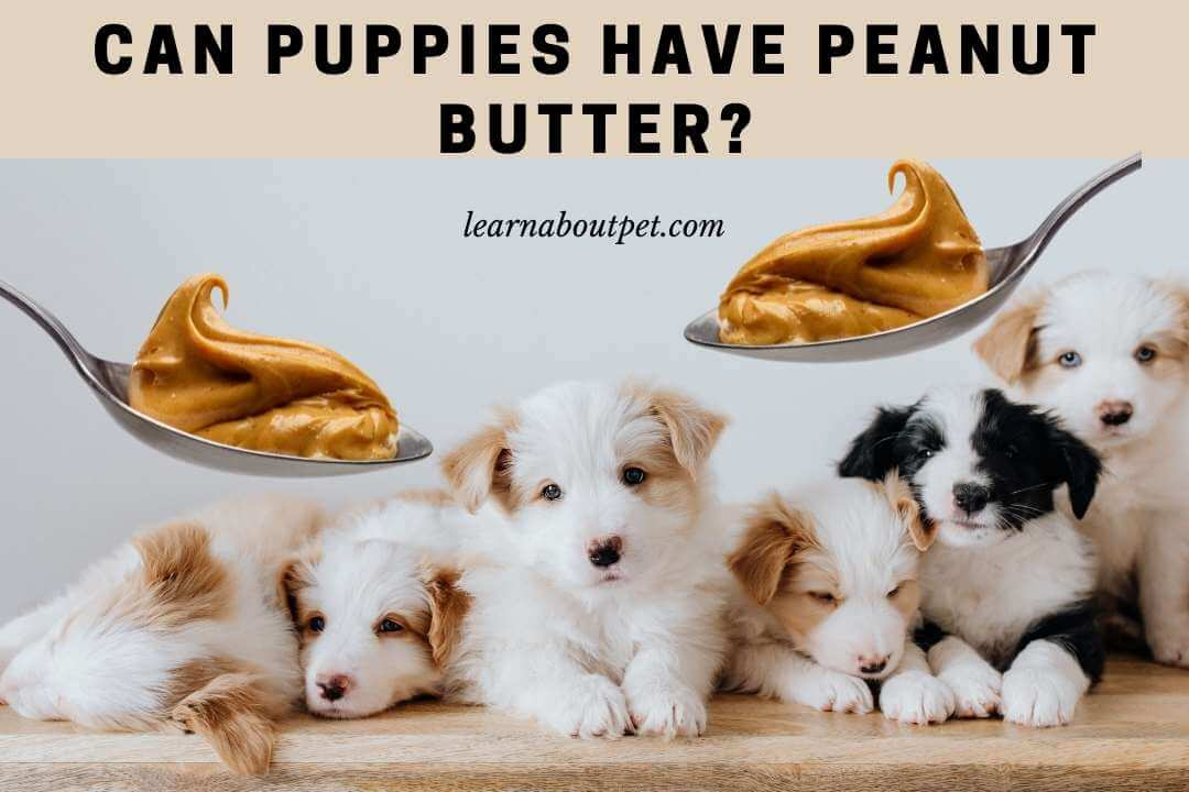 Can puppies have peanut butter