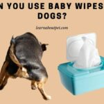 Can You Use Baby Wipes On Dogs? (11 Interesting Facts!)