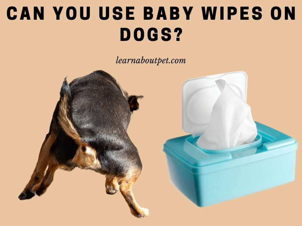 Can you use baby wipes on dogs