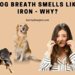 Dog Breath Smells Like Iron : 7 Menacing Facts and How To Stop?