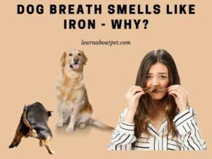 Dog breath smells like iron