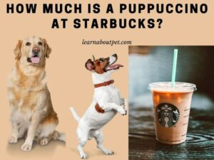 How much is a puppuccino at starbucks