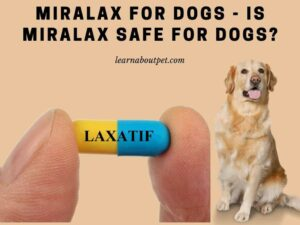 Miralax for dogs - is miralax safe for dogs