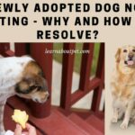 Newly Adopted Dog Not Eating : 7 Interesting Reasons