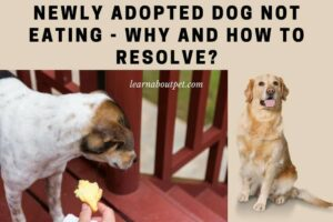 Newly adopted dog not eating - rescue dog wont eat - rescue dog not interested in food