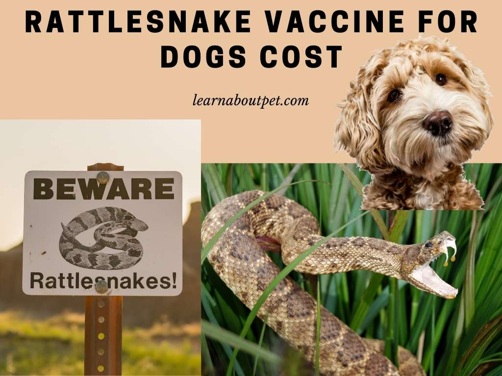 Rattlesnake vaccine for dogs cost
