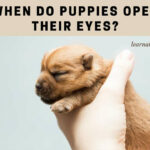 When Do Puppies Open Their Eyes? (9 Cool Facts)