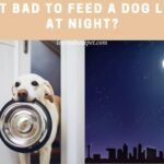 Is It Bad To Feed A Dog Late At Night? (7 Good Healthy Tips!)