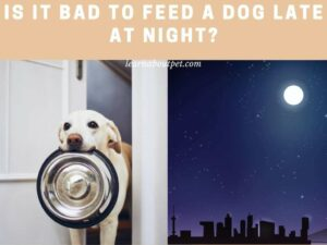 Is it bad to feed a dog late at night