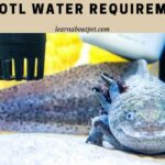 Axolotl Water Requirements : 6 Important Water Parameters