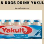 Can Dogs Drink Yakult? (7 Interesting Probiotics Facts)