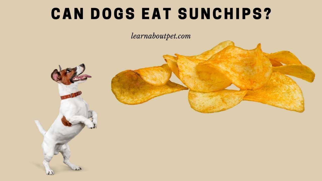 Can dogs eat sunchips