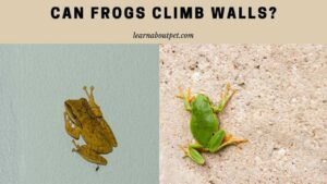 Can frogs climb walls