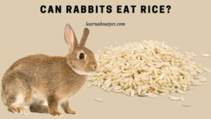 Can rabbits eat rice