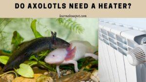 Do axolotls need a heater