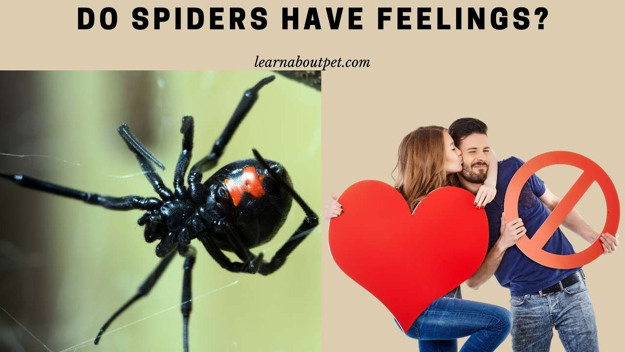Do spiders have feelings