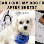 What Can I Give My Dog For Pain After Shots? 4 Natural Home Made Remedies