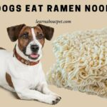 Can Dogs Eat Ramen Noodles? (9 Interesting Facts)