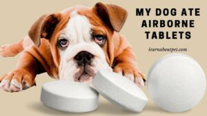 My dog ate airborne tablets