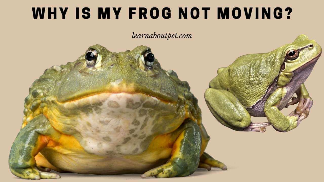 Why is my frog not moving