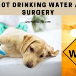 Dog Not Drinking Water After Surgery : 4 Clear Ways To Solve Dog Won't Drink Water Day After Surgery Problem